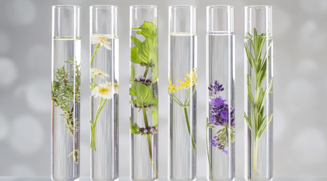 45659448 - scientific experiment - flowers and plants in test tubes